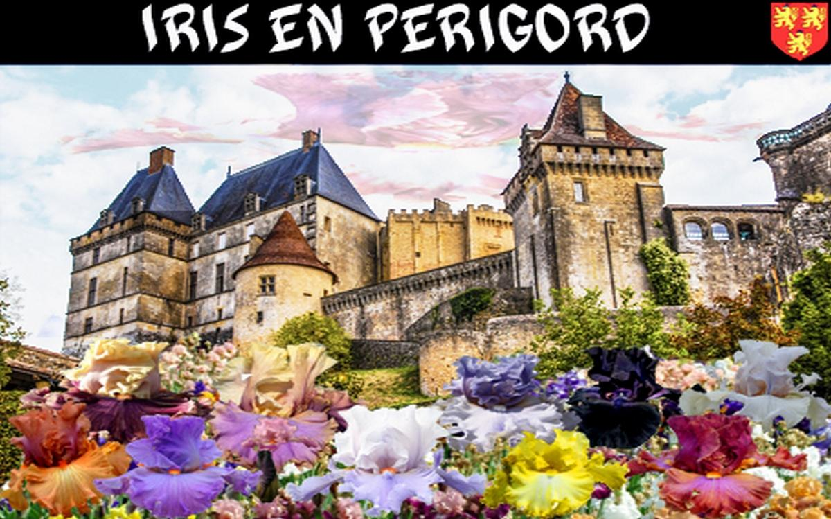 Fond iris en perigord 1